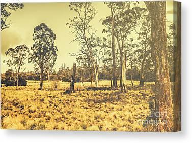 Semi-arid Canvas Prints