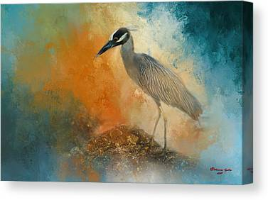 Yellow-crowned Night Heron Canvas Prints