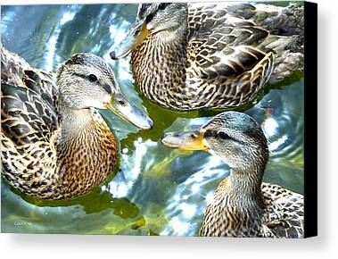 Ducklings Limited Time Promotions