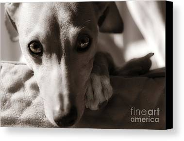 Canine Photographs Limited Time Promotions