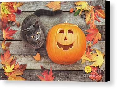 Pumpkins Limited Time Promotions