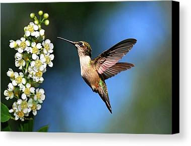 Beautiful Hummingbird Photographs Limited Time Promotions