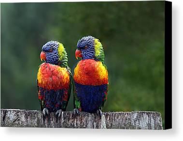 Parrot Canvas Prints