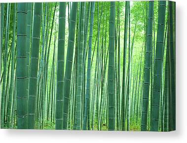 Sagano Bamboo Forest Canvas Prints