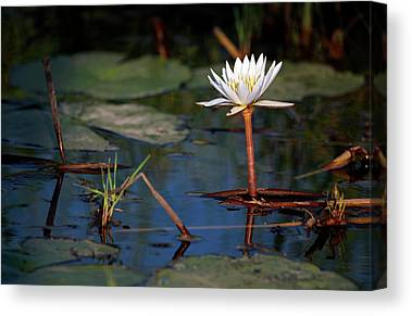 Okavango Swamp Canvas Prints