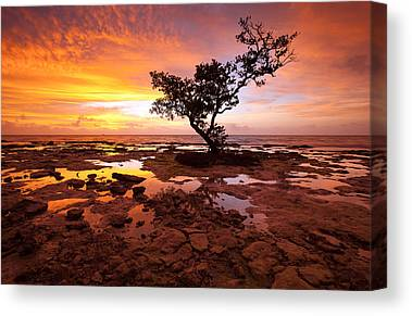 Mangrove Trees Canvas Prints
