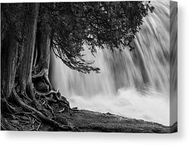 Rooted In Spring Cedar Trees Roots Spring Melt Gooseberry Falls Waterfall Canvas Prints