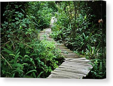 Temperate Rain Forests Canvas Prints