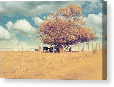 Fence Row Canvas Prints