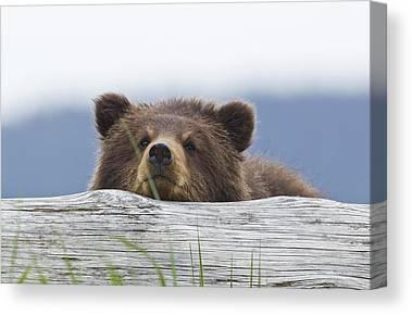 Bears Island Canvas Prints