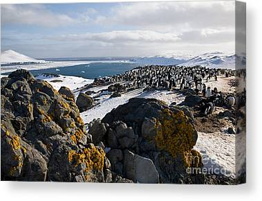 Designs Similar to Adelie Penguin Colony
