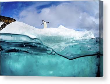 Antarctica Canvas Prints