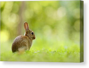 Easter Bunny Canvas Prints