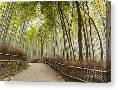 Bamboo Fence Canvas Prints