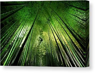 Vegetation Canvas Prints