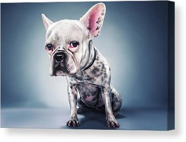 French Bulldog Photographs Canvas Prints