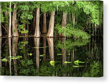 Cypress Swamp Canvas Prints