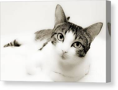 Andee Design Cat Eyes Canvas Prints