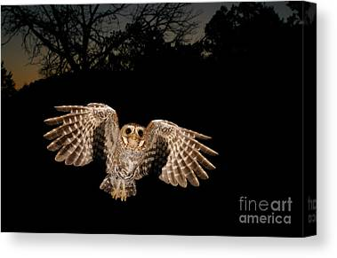 Birds In Flight At Night Canvas Prints