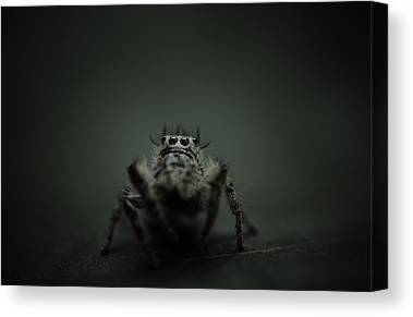 Jumping Spider Canvas Prints