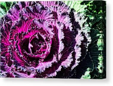 Kale Canvas Prints