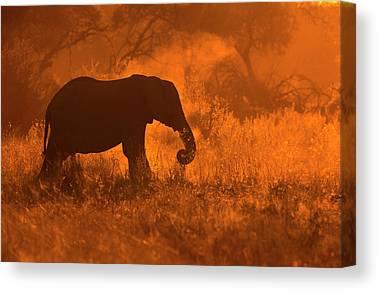 Chobe National Park Canvas Prints