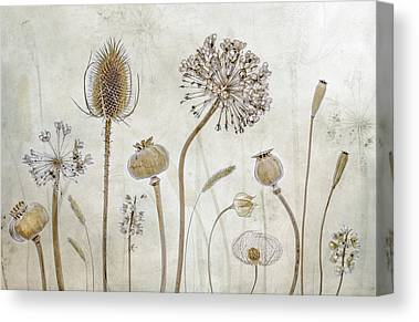 Seed Head Canvas Prints