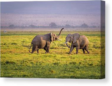 Amboseli Canvas Prints