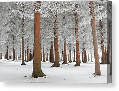 Frost Canvas Prints