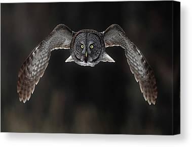 Bird Strike Canvas Prints