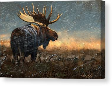 North American Wildlife Canvas Prints