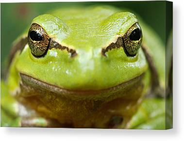 Frog Photographs Canvas Prints