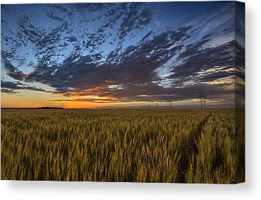 Fields Canvas Prints