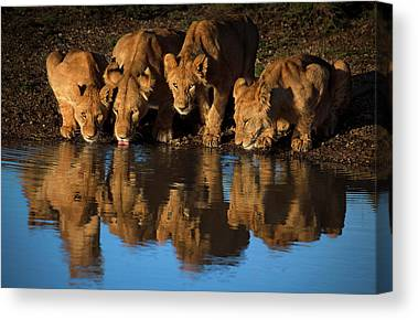 East Africa Canvas Prints