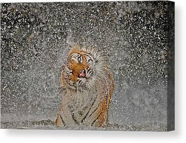 Khao Kheow Open Zoo Canvas Prints