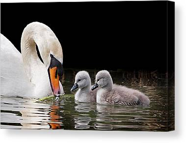 Nestled With Love Canvas Prints