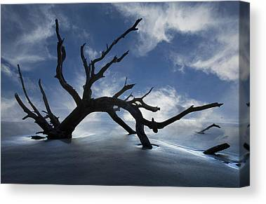Driftwood Beach Fog Canvas Prints