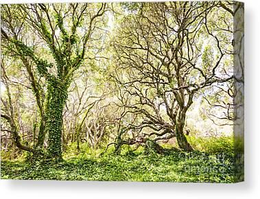 Evergreen Canvas Prints