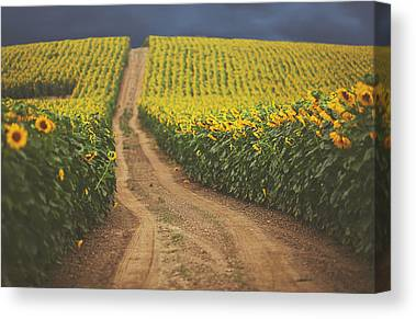Dirt Road Canvas Prints
