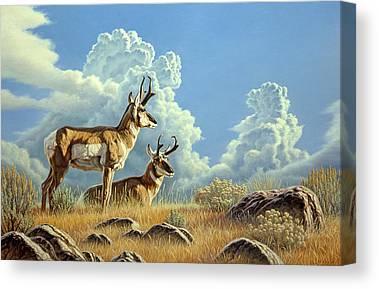 Pronghorn Canvas Prints