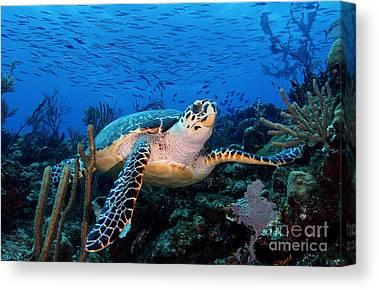 Parrot Fish Photographs Canvas Prints