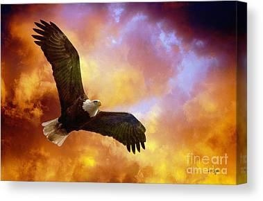 Eagle In Flight Canvas Prints