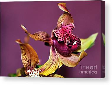 Golden Pink Orchid Canvas Prints