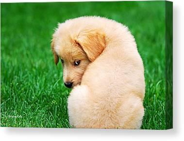 Fuzzy Golden Puppy Canvas Prints
