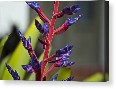 Bromeliad Photographs Canvas Prints