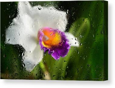 Cattleyas Canvas Prints