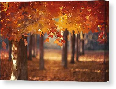 Autumn Leaf Canvas Prints