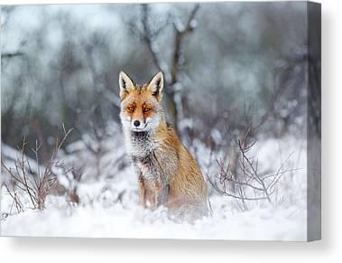 Fox Canvas Prints