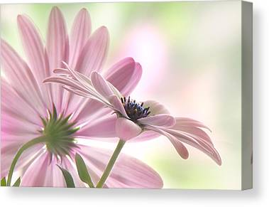 Asteraceae Canvas Prints