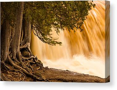 Rooted In Spring Mary Amerman Waterfall Cedar Tree Roots Tree Roots Canvas Prints